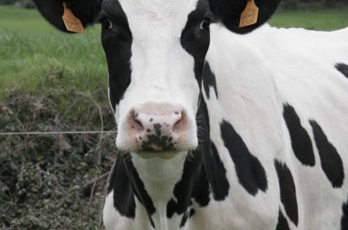 Medidas efectivas que garanticen la rentabilidad y sostenibilidad del sector lácteo gallego. Por AGACA