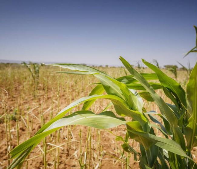 El índice FAO de precios mundiales de los alimentos básicos cae por primera vez en 12 meses