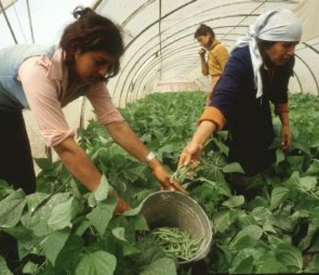 El MAPA espera que al menos 500 jóvenes agricultores accedan al Programa CULTIVA de formación en explotaciones modelo