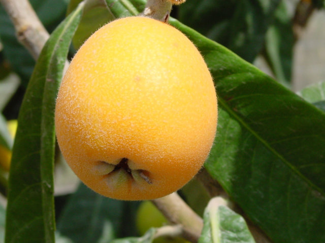El riego deficitario como herramienta para una fruticultura sostenible