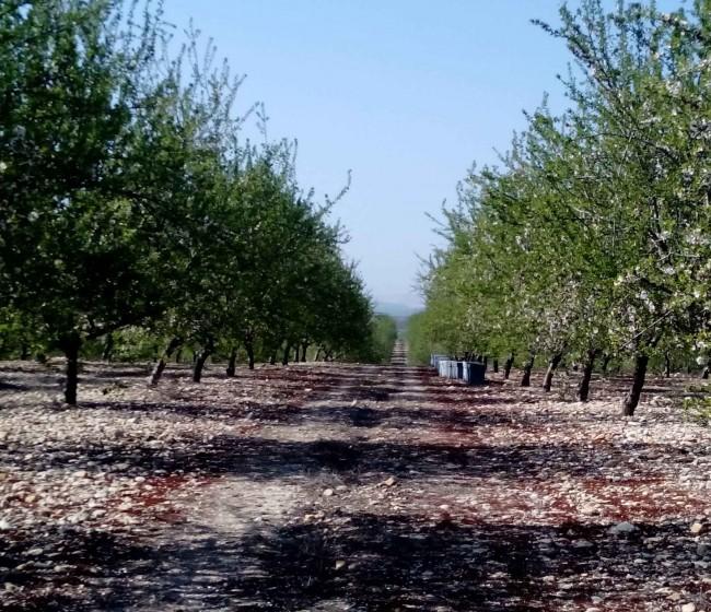 Murcia prepara su I Congreso de Agricultura Ecológica