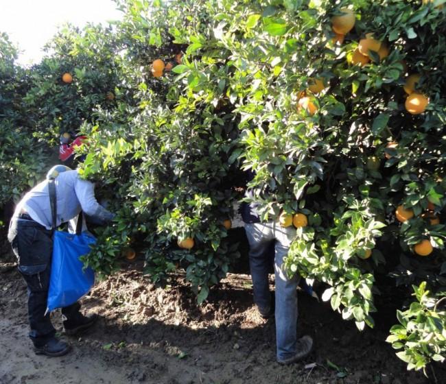 Encuesta EPA: la ocupación en agricultura aumenta en 13.100 personas en el segundo trimestre