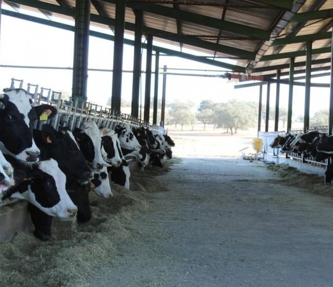 Manifestaciones del sector vacuno de leche para que los precios actuales cubran los costes de producción