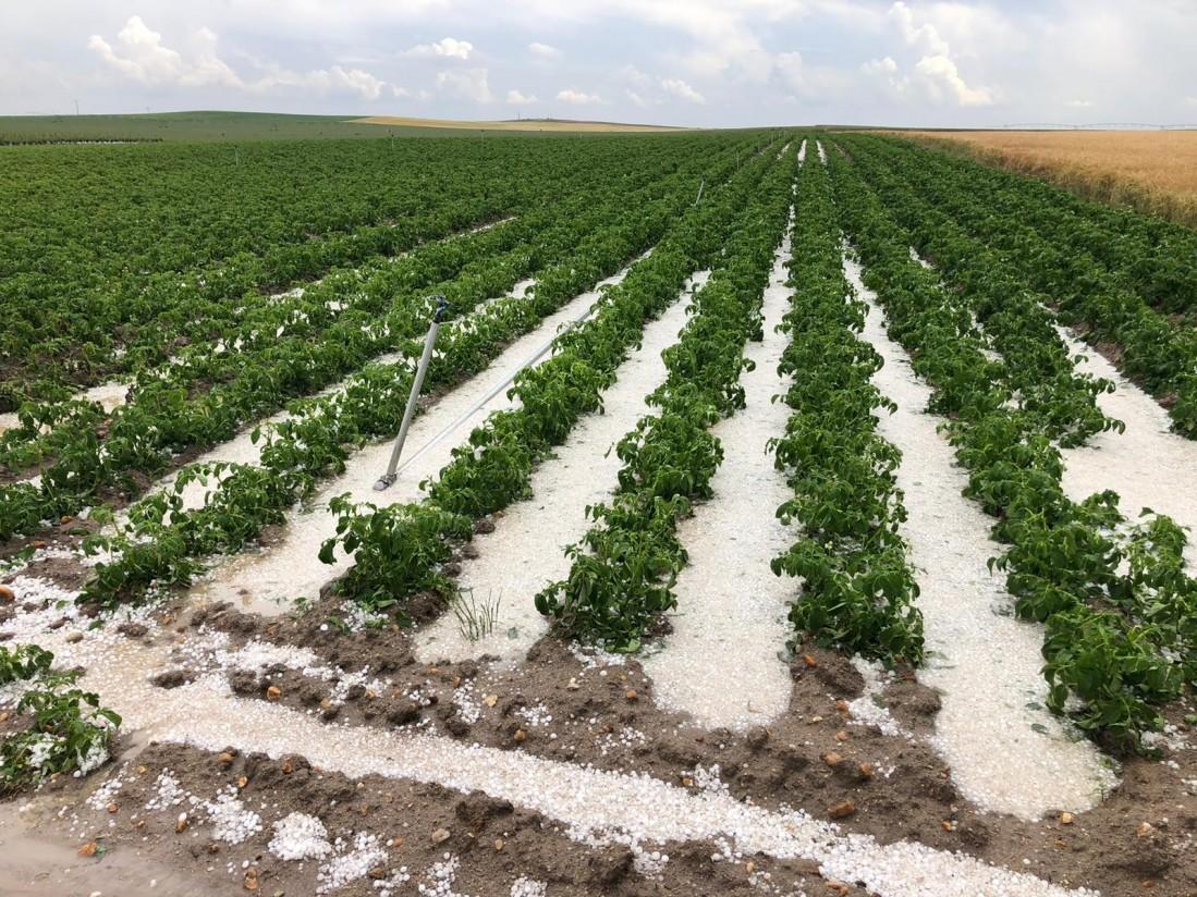 Más de 111 M€ de indemnizaciones del seguro agrario por siniestros en el campo durante junio