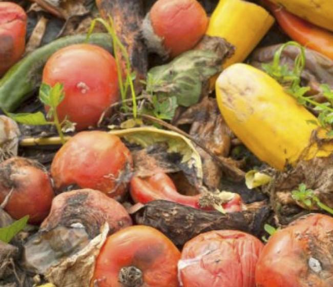 WWF alerta de que desperdiciamos ya el equivalente al 40% de todos los alimentos producidos