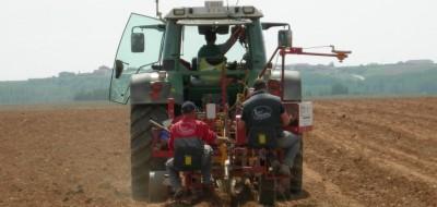 Retos para la viabilidad futura del cultivo de la vid