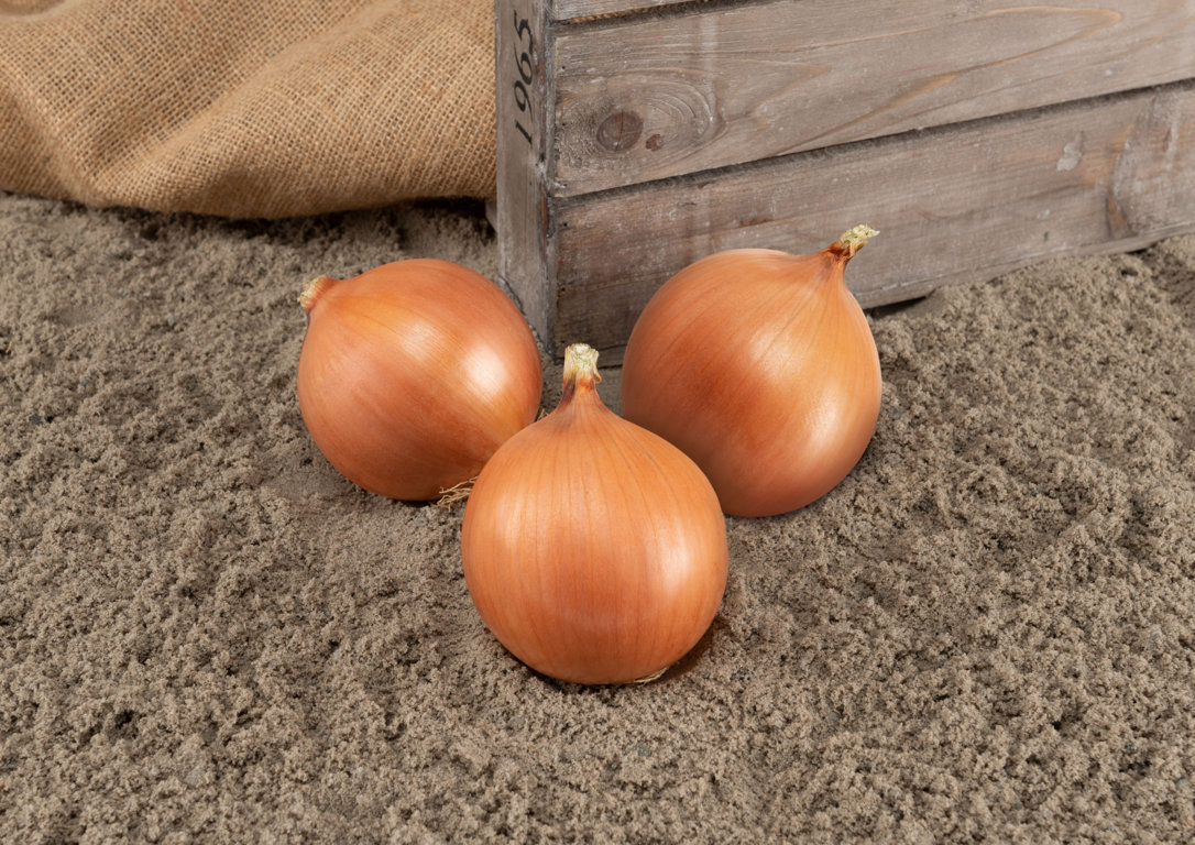 onion_yellow_pantano-24057-LQ _baja
