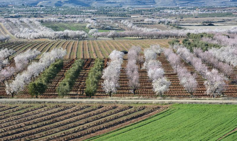 El MAPA presenta a CC.AA. su propuesta de ecoesquemas con 9 prácticas sostenibles para el medio ambiente y el clima