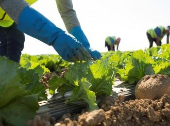 El paro en Agricultura bajó cerca de un 5% y en 8.860 desempleados en julio