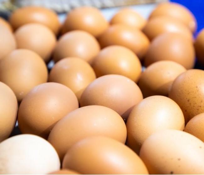 País Vasco y Navarra, las regiones más consumidoras de huevo en España