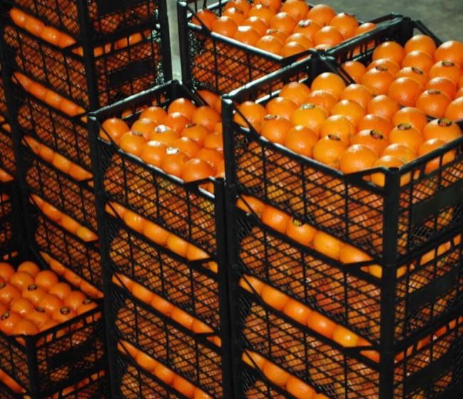 Casi 500 alertas en un año por productos hortofrutícolas procedentes de Turquía con residuos de fitosanitarios