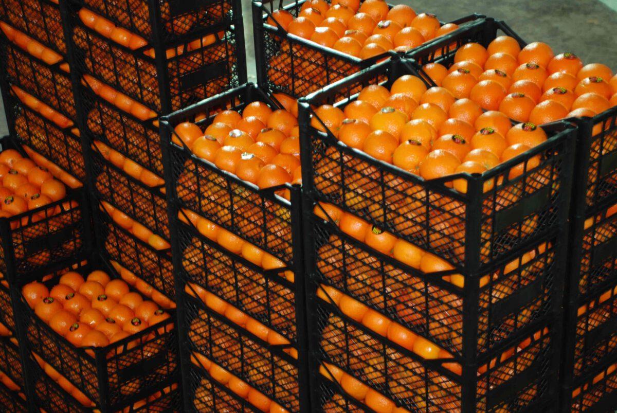 Naranjas turcas