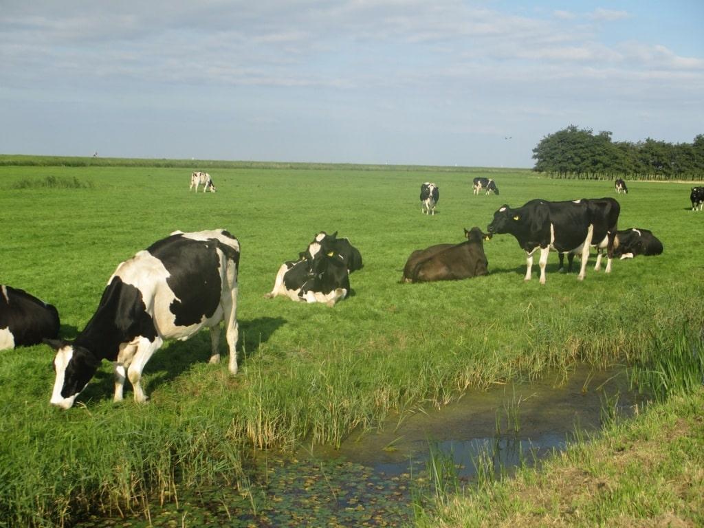 El importe medio nacional declarado por la leche cruda de vaca volvió a bajar en junio