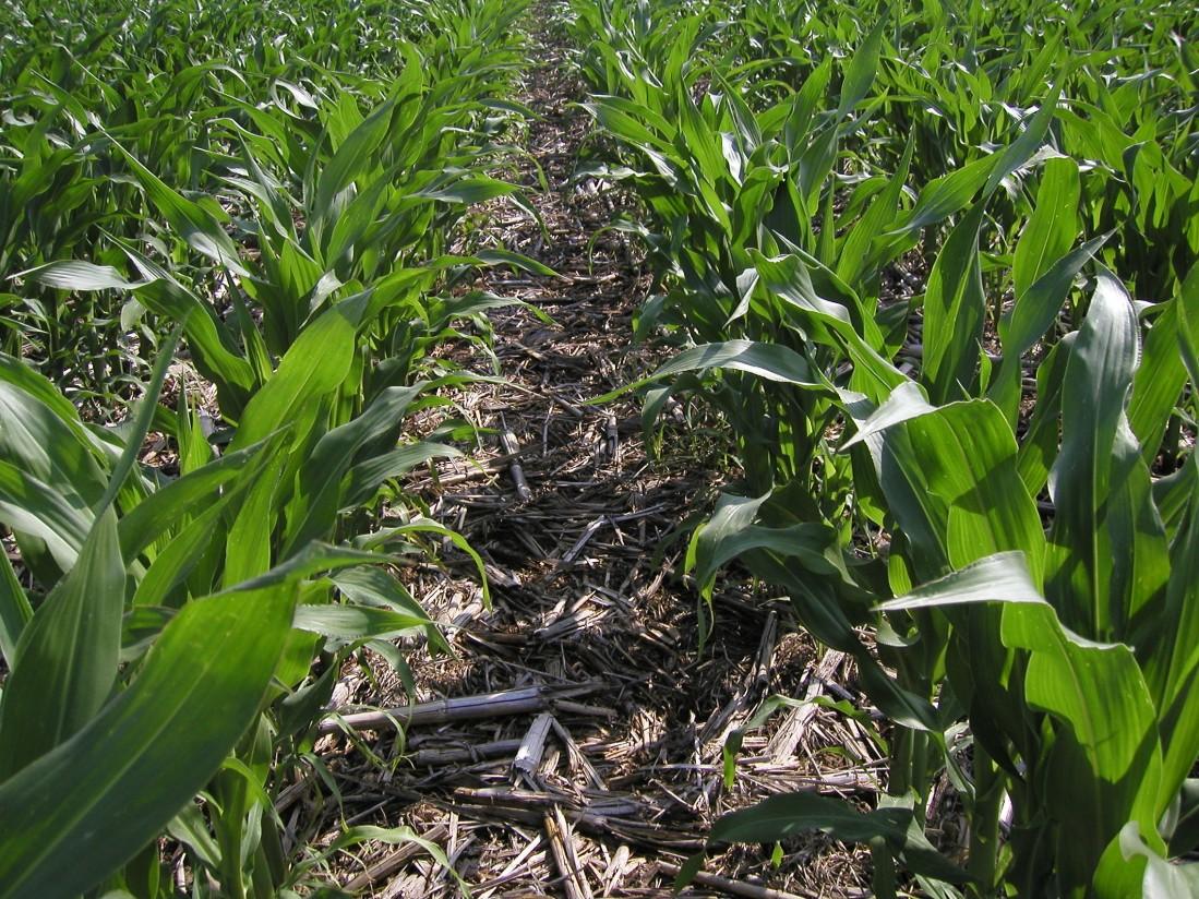 Diversos estudios confiman el potencial mitigador de la agricultura de conservación frente al cambio climático