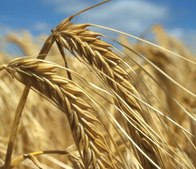 El Índice FAO de precios mundiales de los alimentos básicos bajó en julio por segundo mes consecutivo