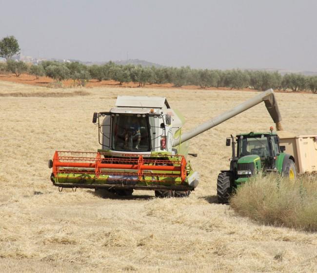 El USDA prevé que la notable cosecha española de cereales 2021/22 alivie el déficit importador de grano