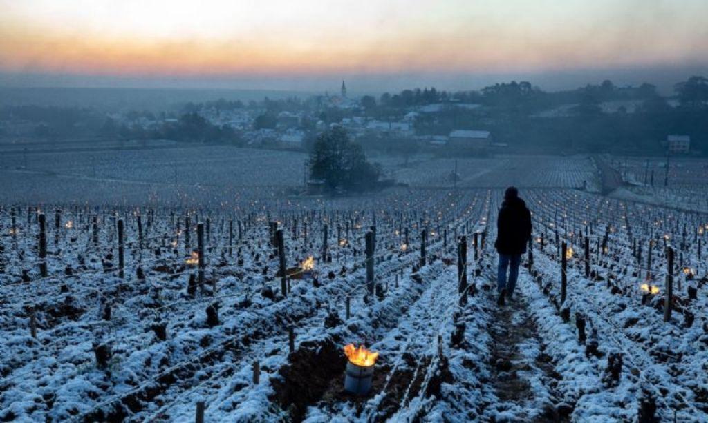 Francia prevé obtener apenas entre 32,6-35,6 Mhl de producción vitivinícola en 2021/22