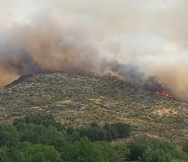 Incendio: La Diputación de Ávila coordina las ayudas entre ganaderos afectados y donantes de alimentos para el ganado