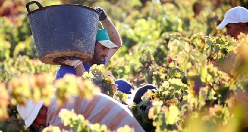 La producción nacional de vino y mosto podría bajar de los 40 Mhl en la actual campaña 2021/22