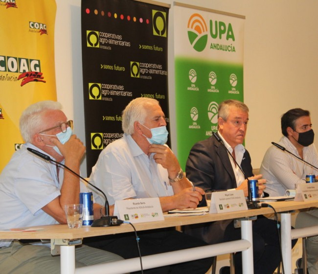El sector agrario andaluz, contra los ecoesquemas propuestos por el MAPA