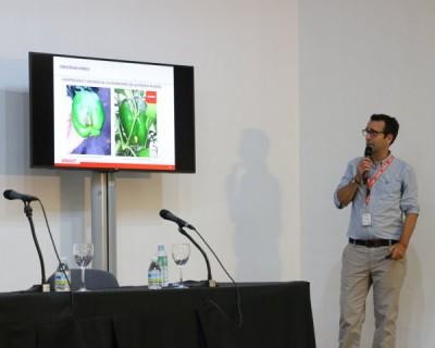 Brandt presenta una tecnología que retrasa hasta cinco días la aparición de hongos postcosecha en fresa