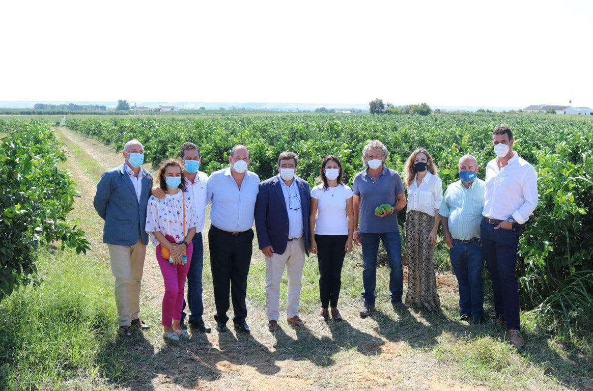 Andalucía producirá más de 2,4 millones de toneladas de cítricos en la campaña 2021/22