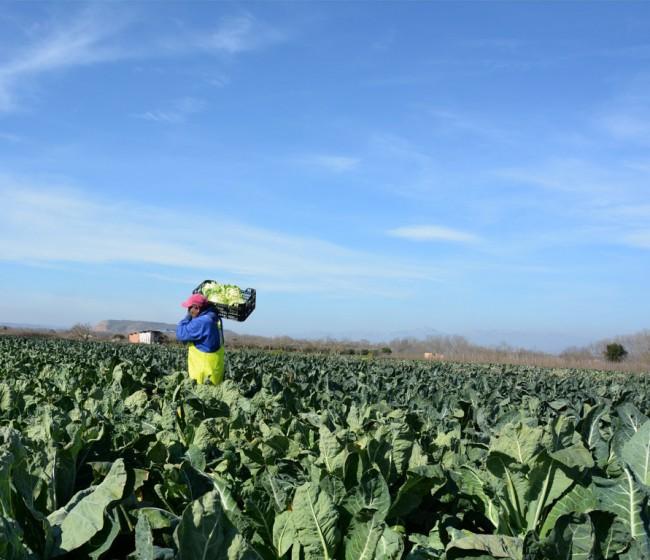 Los empresarios agrarios rechazan por inasumible una nueva subida del SMI este año en el campo