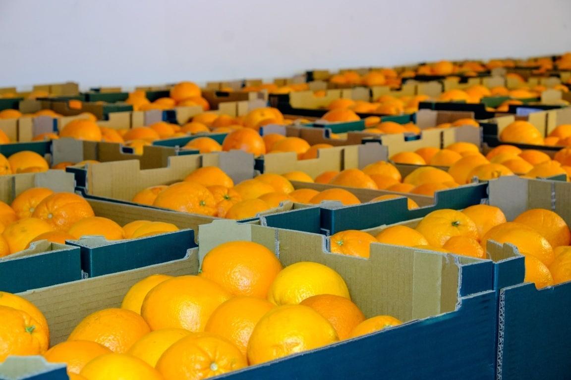 La Unió detecta por tercer año consecutivo materias activas de pesticidas prohibidas en la UE en cítricos de Sudáfrica