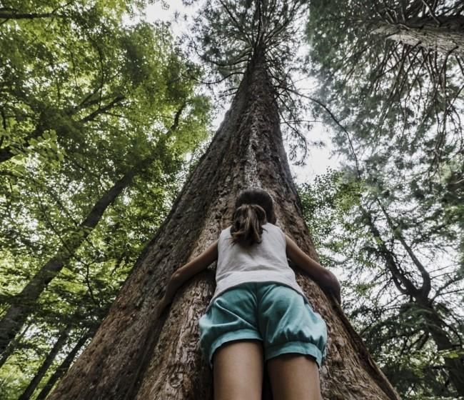 CaixaBank convoca ayudas para apoyar proyectos de mejora del patrimonio natural