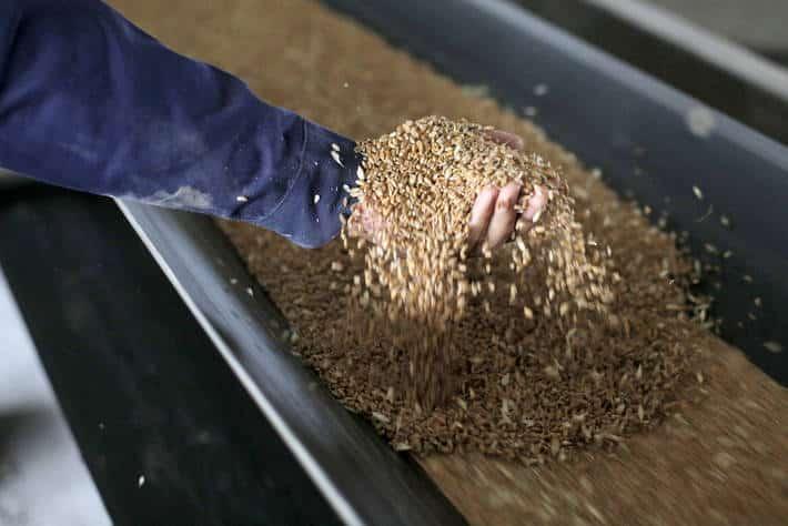 Cooperativas prevé la importación de12,8 Mt para atender la demanda interna de cereales en 2021/22