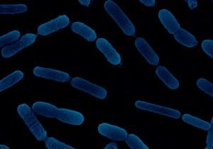 Atens descubre dos bacterias que desbloquean el fósforo del suelo
