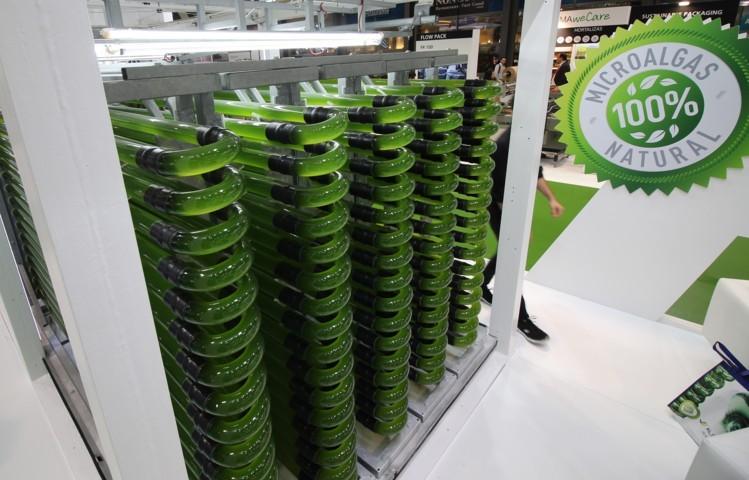 AlgaEnergy participa en Fruit Attraction por séptimo año consecutivo