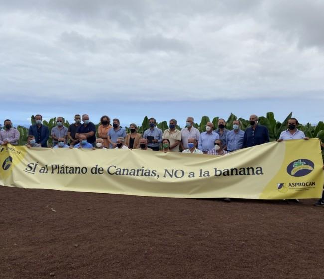 Productores de plátanos firman un manifiesto contra la Ley de la Cadena Alimentaria