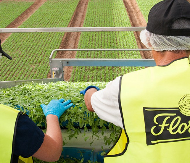 Florette anuncia el cierre de su centro de producción en Cuenca