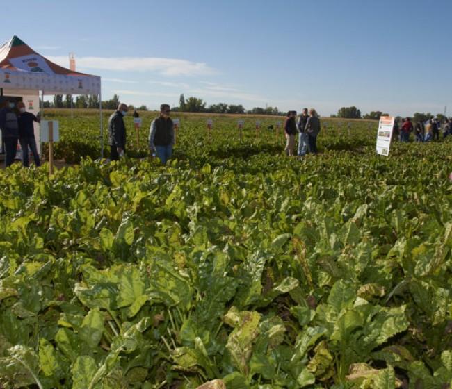 KWS muestra sus últimos avances en maíz y remolcha