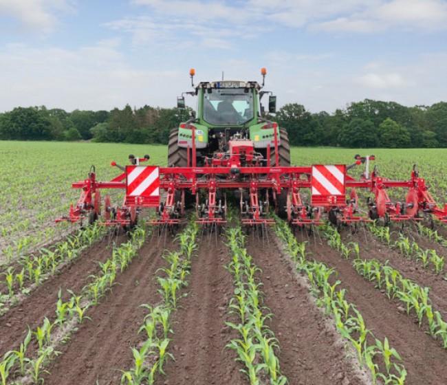 La tecnología de escardado de Steketee demuestra su eficacia en un maíz sembrado con DeltaRow