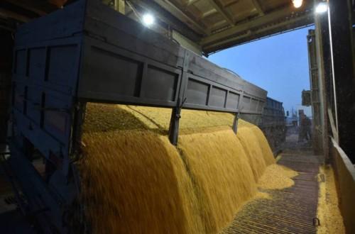 El CIC eleva la producción mundial de maíz hasta un récord de 1.209 Mt en 2021/22