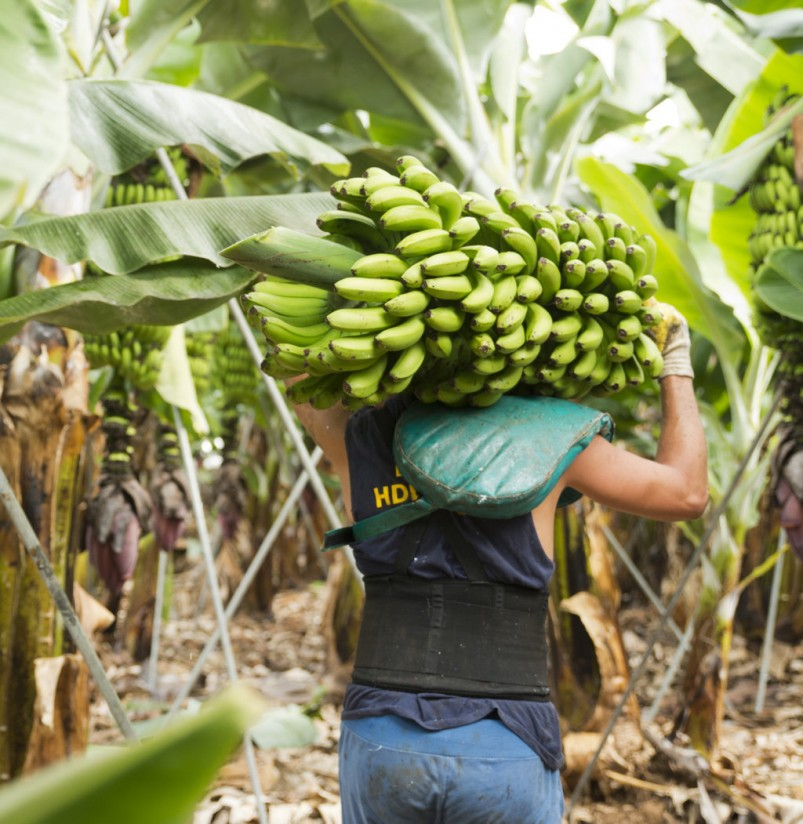 El Congreso aprueba prohibir la venta a pérdidas a lo largo de toda la cadena alimentaria