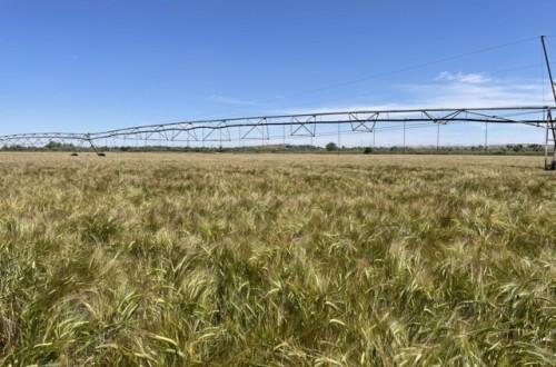 El futuro del fósforo fertilizante (I)