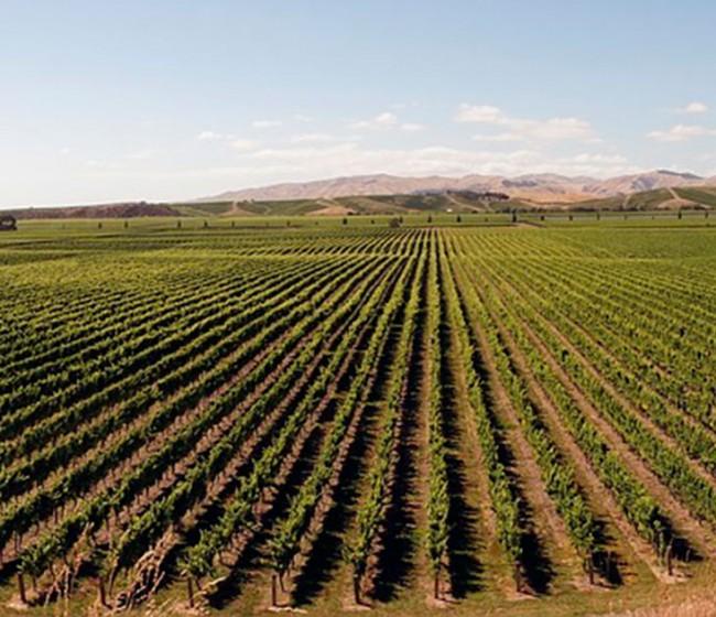 El MAPA última RD para flexibilizar medidas del PASVE vitivinícola frente a los efectos de la Covid-19