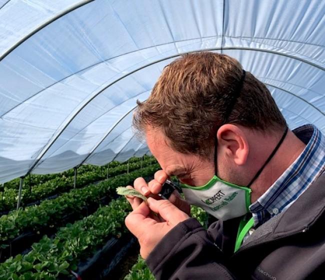Koppert presentará sus nuevas estrategias de control biológico en el Congreso Internacional de Frutos Rojos