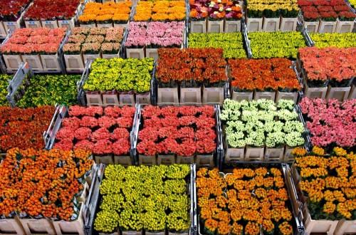 La exportación de flor cortada española crece un 49% en el último lustro