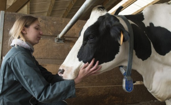 La Eurocámara defiende un enfoque equilibrado del bienestar de los animales en las explotaciones