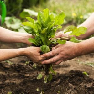 """La Estrategia """"De la granja a la mesa"""" y la transición ecológica. Por Clara Aguilera."""