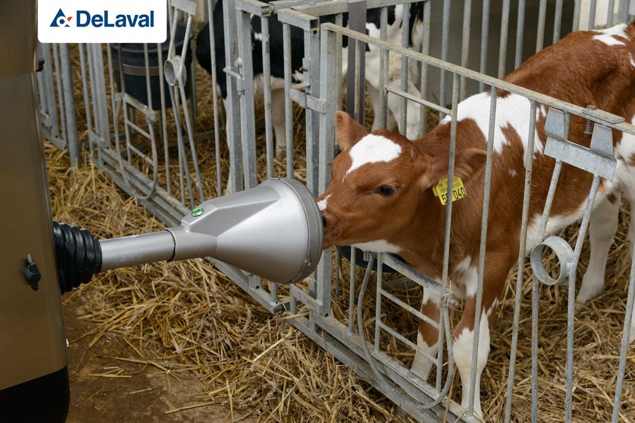 CalfRail CFR100, la propuesta de DeLaval para alimentar a las terneras de forma más natural