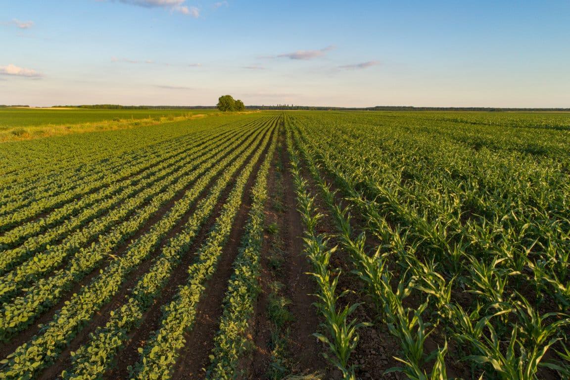 El precio medio de la tierra de uso agrario se moderó durante el pasado año