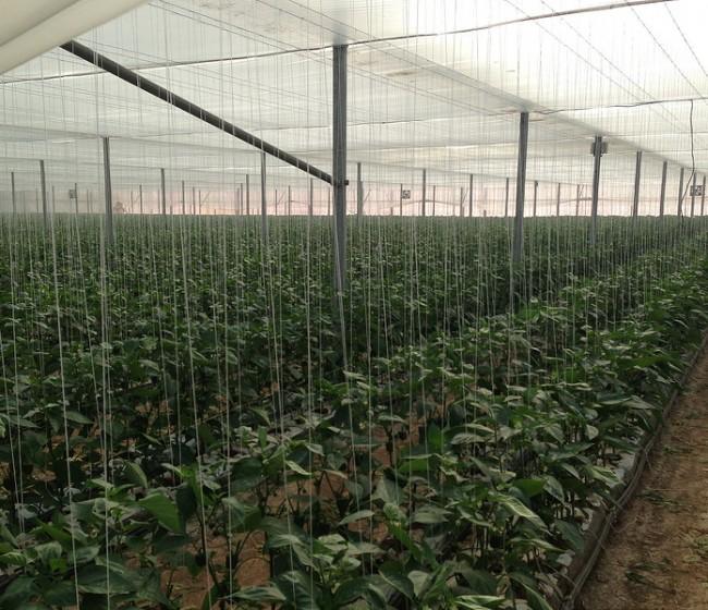 Bruselas aprueba las ayudas de Estado por 120 M€ para la modernización de invernaderos españoles