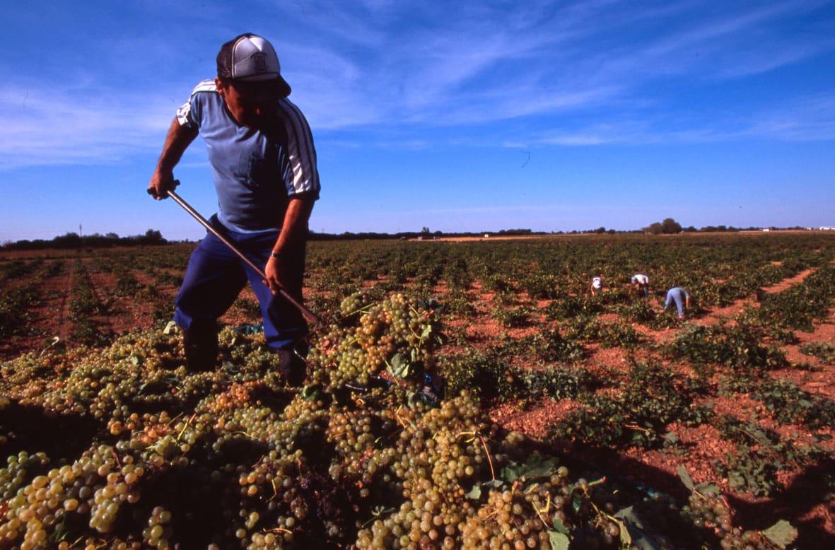 La localidad de Tomelloso, el mayor viñedo del mundo (1)