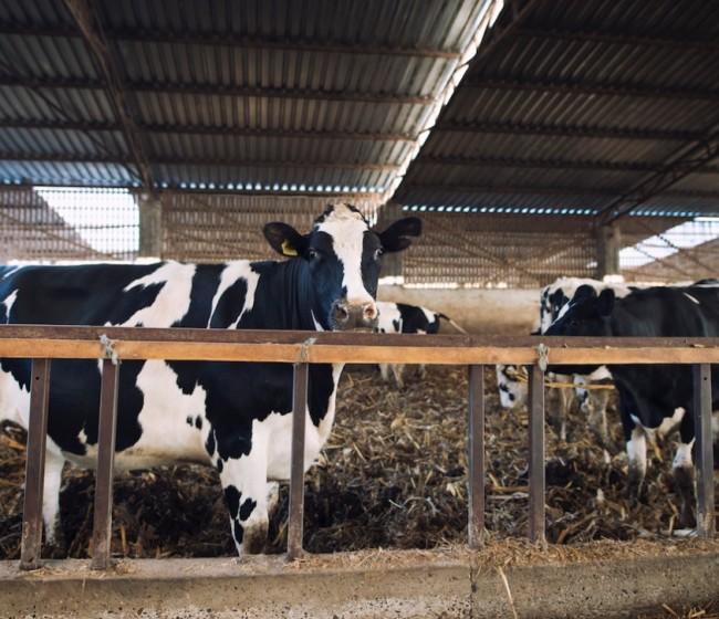 Substrate AI prepara la granja de producción lechera del futuro mediante el uso de la inteligencia artificial