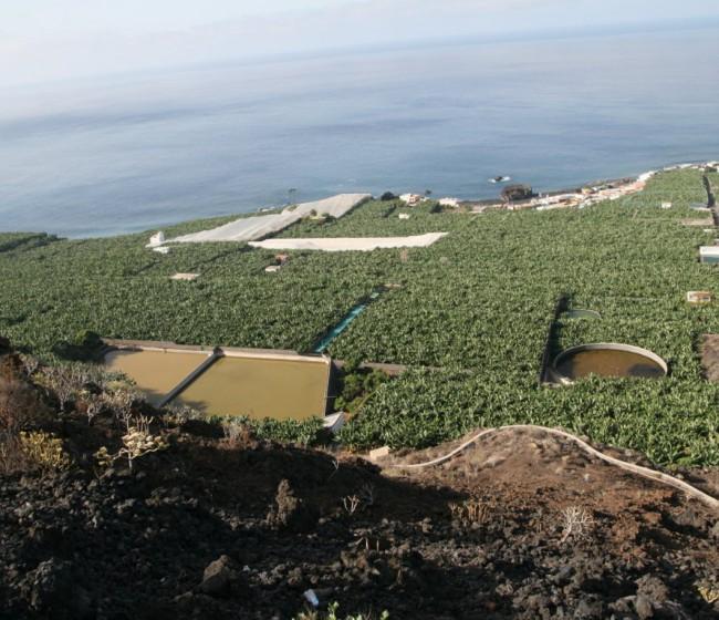Agroseguro adelanta 10,3 M€ por indemnizaciones a productores de plátano y aguacate de La Palma
